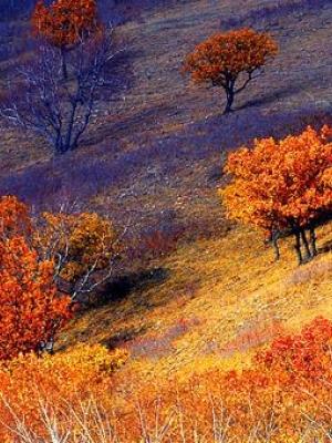 全国各地方秋末景色的压轴美景