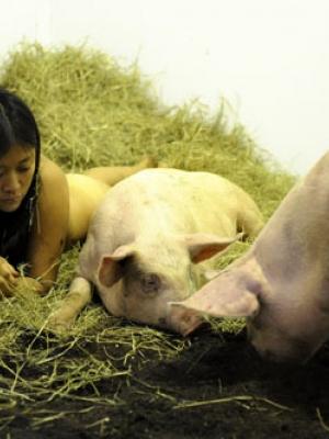 """美国行为艺术家美女裸体""""与猪裸睡"""""""
