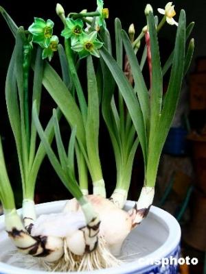 不是所有的鲜花都适合摆放在居室中看看哪些植物会致命