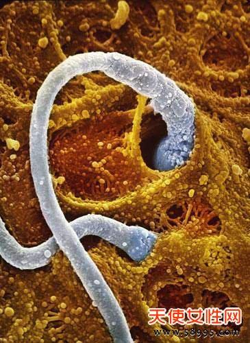 精子发育成胎儿全过程
